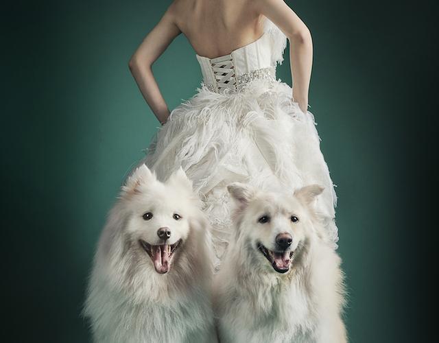 想帶毛孩拍攝婚紗照?攝影師分享寵物婚攝7大常見疑問